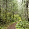 The dense forest floor along the trail to Pinard Falls.- Pinard Falls