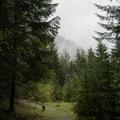 Clearings along the hike to Pinard Falls.- Pinard Falls