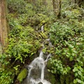One of the small cascades along the trail to Pinard Falls.- Pinard Falls