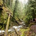 Fallen timber along the route to Pinard Falls.- Pinard Falls