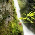 Unidentified species seen at Pinard Falls (help us identify it by providing feedback).- Pinard Falls