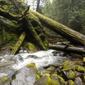 Fallen trees and the burbling creek below Pinard Falls.- Pinard Falls