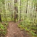 The trail through Umpqua National Forest.- Spirit Falls on Alex Creek