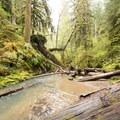 The stream near Spirit Falls.- Spirit Falls on Alex Creek