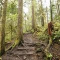 The trail ascends stairs through Umpqua National Forest.- Spirit Falls on Alex Creek