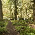 The beautiful Umpqua National Forest surrounding Hobo Camp.- Hobo Camp