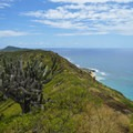 The drier side of the island has many desert-like plants.- Koko Crater Rim Trail