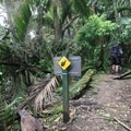 Carnivorous land snails can be seen along the first part of the Heaphy Track.- New Zealand Great Walks: Heaphy Track