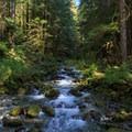 A creek crossing.- Little North Santiam River Trail