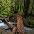A rudimentary footbridge crossing a small creek.- Little North Santiam River Trail
