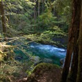 Views between the trees of the vibrant river.- Little North Santiam River Trail