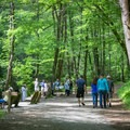 Deep Creek Loop is a perfect spot for a easy day hike, tubing, or even a Smokies wedding by a waterfall!- Deep Creek Loop