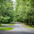 A wide open, clean, and lush campground, Deep Creek is one of the best in the Smokies.- Deep Creek Campground