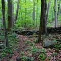 Forest foliage of Shenandoah National Park.- Little Devils Stairs