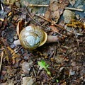 Trail snail!- Little Devils Stairs