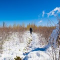 The snow provides a good opportunity to spot a variety of wildlife tracks!- Point Imperial Trail