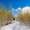 Just before a beautiful vista you'll walk through a dense stand of regenerating aspen.- Point Imperial Trail