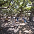 Lahaina Banyan Court.- Lahaina National Historic District