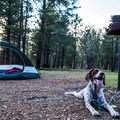 Dogs are allowed in Ten-X Campground.- Ten-X Campground