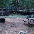 Wildlife may come and visit you.- Ten-X Campground