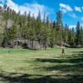 Parts of the landscape resemble alpine meadows.- Ken Patrick Trail