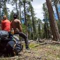 Pausing for a break among the proud ponderosa pines.- Ken Patrick Trail