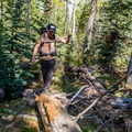 Downed trees require some scrambling on parts of this trail.- Ken Patrick Trail
