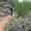 Wildflowers are everywhere along the trail in April.- Dripping Springs