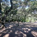 Parking near the trailhead is beneath a grove of shady oak trees.- Nojoqui Falls