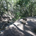 A couple of benches are available along the trail.- Nojoqui Falls
