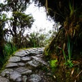 The third day of the hike traverses a lush, high-elevation cloud forest.- Machu Picchu via the Inca Trail