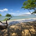 Kehei Beach under the shade of a algoroba (Prosopis pallida) trees.- Kihei Beach - Shoreline Access 118