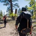 Open forest terrain along Widforss Trail.- Widforss Trail