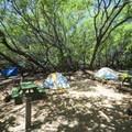 Walk-in tent sites at Camp Olowalu.- Camp Olowalu