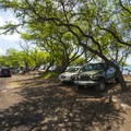 Parking for Ka'ili'ili Beach under the shade of algoroba (Prosopis pallida) trees.- Olowalu Reef + Ka'ili'ili Beach