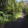 Looking back on the trail en route to Upper Twin Falls.- Twin Falls Hike + Wailele Farm