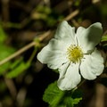 A blossom in bloom.- West Fork Trail Hike