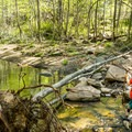 A stream crossing on the West Fork.- West Fork Trail Hike