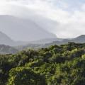 View up the slopes of Haleakalā's Kīpahulu Valley Biological Reserve.- Kūloa Point + Kahakai Trail