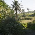 View back west on the Kahakai Trail.- Kūloa Point + Kahakai Trail