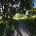 A screw-pine/hala (pandanus tectorius) along the Kūloa Point Trail.- Kūloa Point + Kahakai Trail