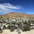 A view along the trail.- Lost Palms Oasis + Mastodon Peak Trail