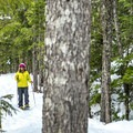 Snowshoeing through the forest at Brandywine Falls Provincial Park.- Brandywine Falls Snowshoe