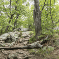 More rocks and trees to climb over.- Mount Taurus / Bull Hill