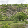 A field of locust trees inside the mine.- Mount Taurus / Bull Hill