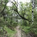 A wooded area.- Devils Pass via the Maah Daah Hey Trail