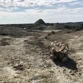 The South Petrified Forest.- Petrified Forest Loop Trail