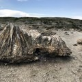 The North Petrified Forest.- Petrified Forest Loop Trail
