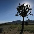 The sun hides behind a Joshua tree at Saddleback Butte State Park.- Saddleback Butte State Park