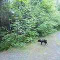 Canine curiosity on the Cloverpatch Trail.- Cloverpatch Trail Hike